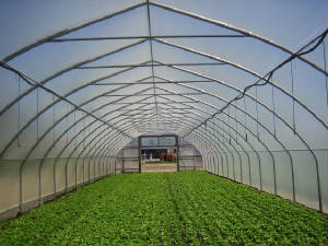 Greenhouses/photo.JPG